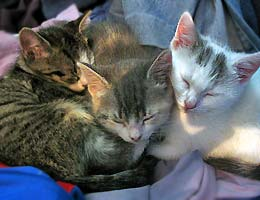 Three little kittens sleeping