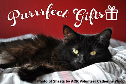 Purrrfect Gifts - Shasta