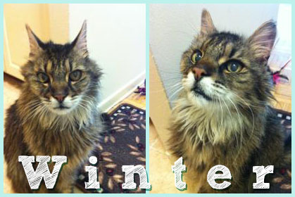 Winter the cat