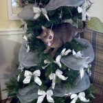 Molly the cat in a tree