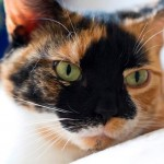 Happy Tail: Patches