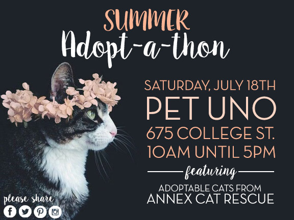Pet uno annex cat rescue adopt-a-thon July 2015