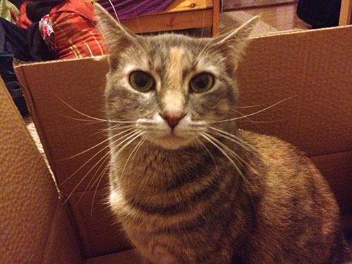 Happy Tails: Sparrow