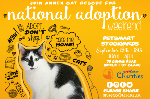 Petsmart Charities Adopt-a-thon September 2015