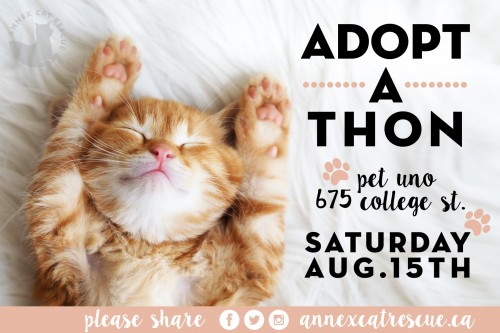 August Adoptathon at pet uno