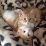 Happy Tails: Fanta & Creamsicle