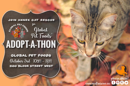 Annex Cat Rescue Adoptathon Global Pet Foods