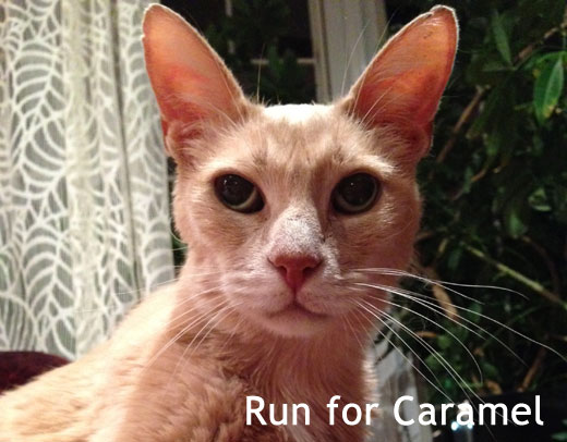 walk or run for Caramel