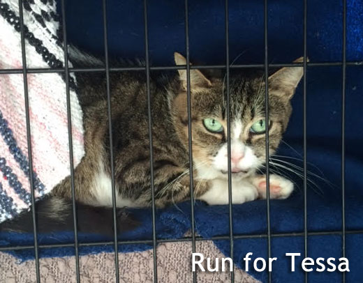 Tessa Annex cat rescue