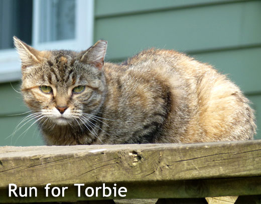 Torbie Annex Cat Rescue
