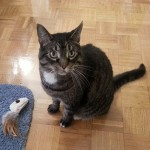 Happy Tails: Jellybean