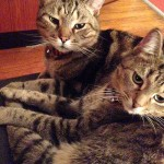 Happy Tails: Augie & Edie