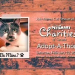 Annex Cat Rescue adoptathon February 2016