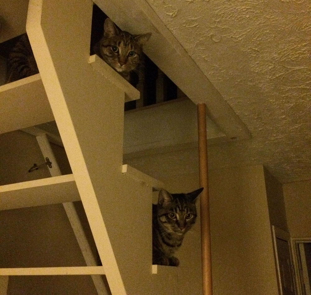 Charlie and Leo on the stairs