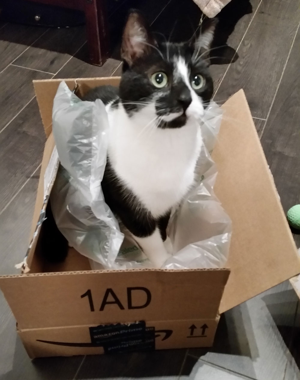 Douglas and the Amazon box