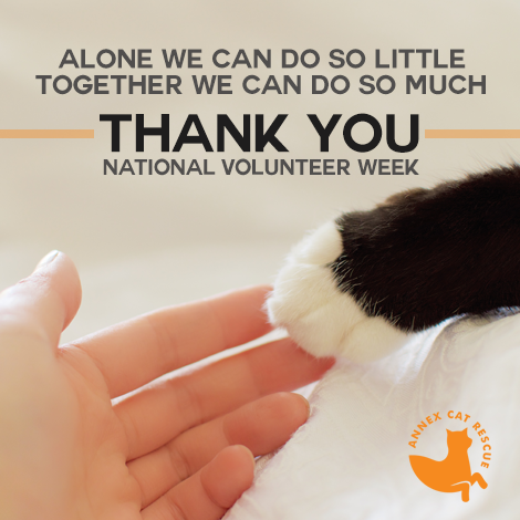 Thank you to all our volunteers!