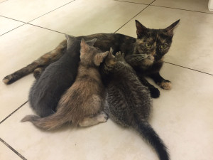 Cayenne and her kittens need a foster home