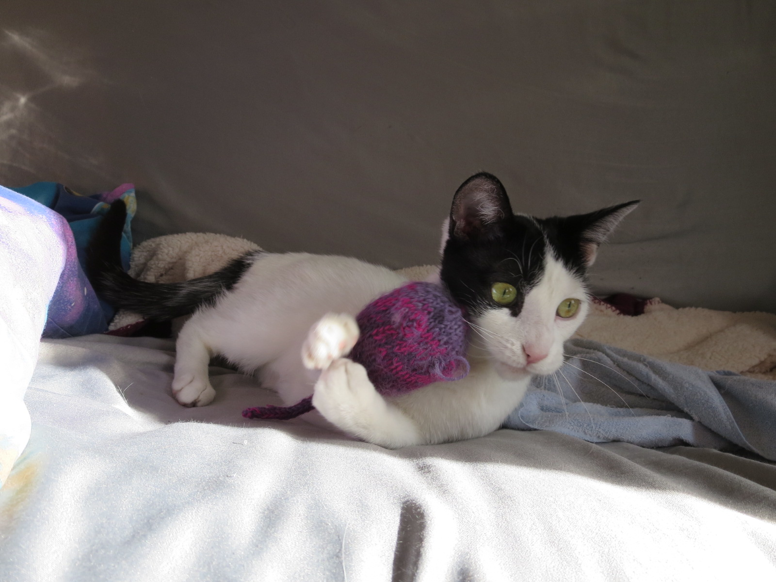 Happy Tails: Martha with mouse