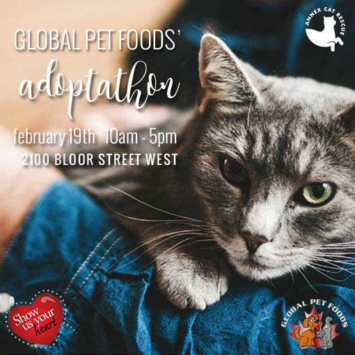 join us for our next Adoptathon at Global Pet Foods High park