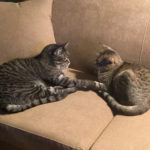 Happy Tails: Felix & Oscar
