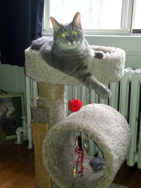 Camille loves her cat tree