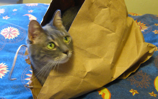 who doesn't love paper bags