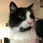 Happy Tails: Sidney