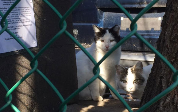 volunteers needed to feed feral cat colony