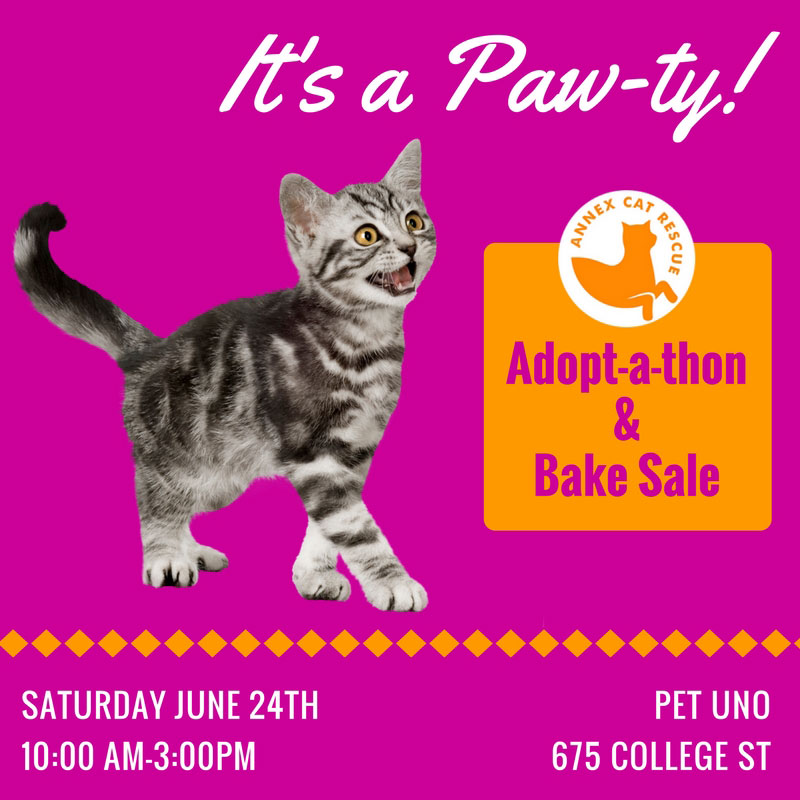Kitten and cat adoptathon at Pet Uno