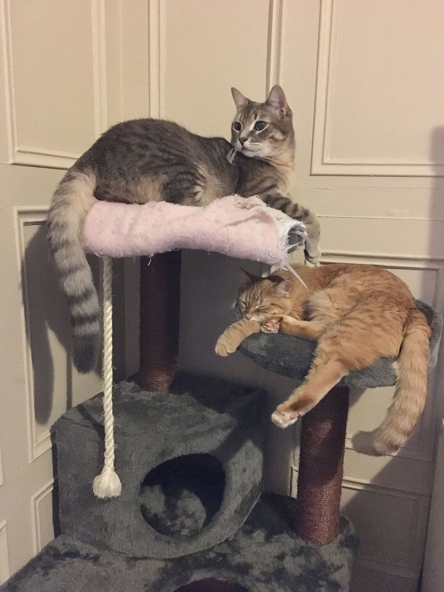 sharing the cat tree