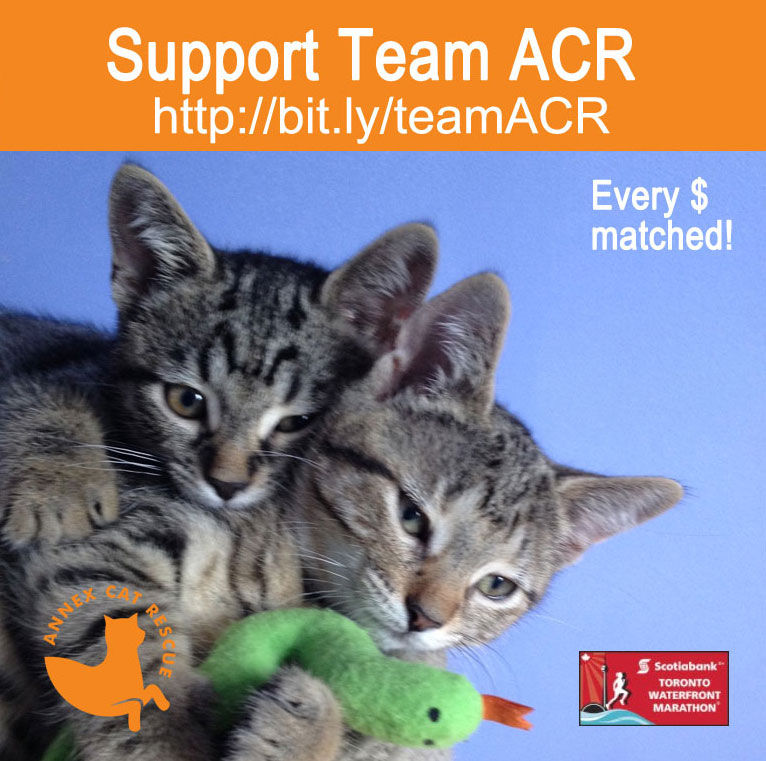 support Annex cat Rescue in the Scotiabank Charity Challenge