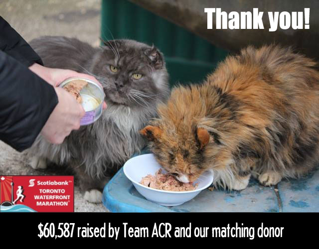 thank you from Team Annex Cat Rescue