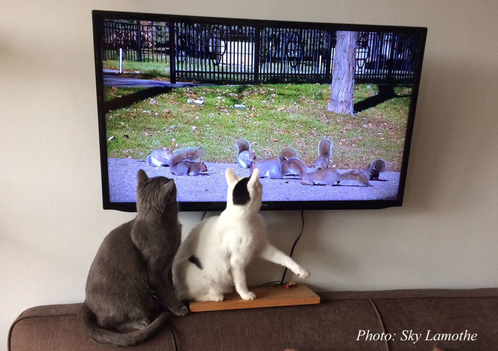 How To Keep Indoor Cats Engaged Entertained