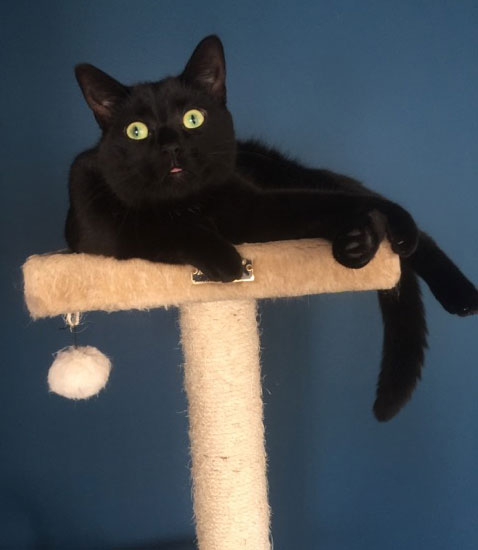 top of the cat tree for Mauie