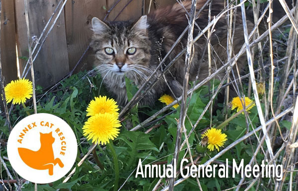 Annex Cat Rescue Annual General Meeting