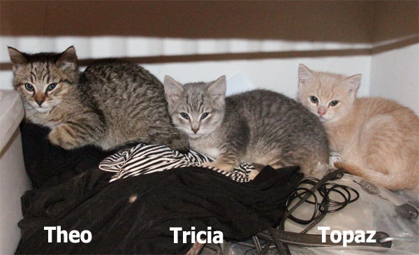 Theo, Tricia and Topaz