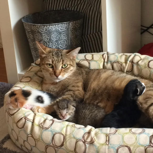 Bella and her kittens