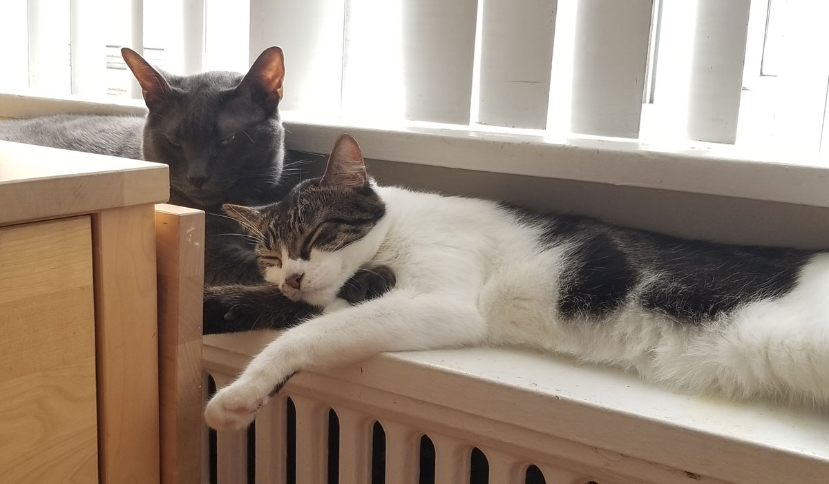 Dracula happy to have a new companion to curl up to