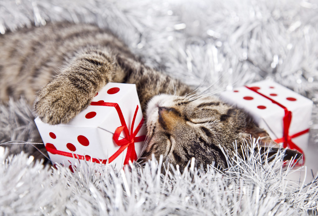 Purrfect Gifts: Bring joy to your loved ones this holiday season