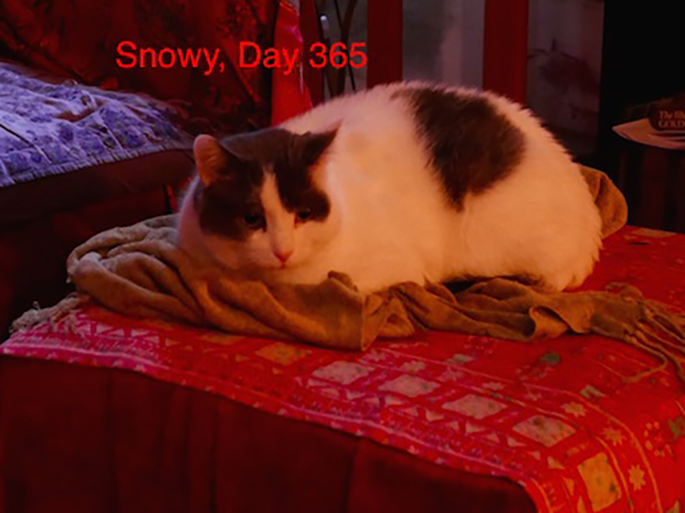 Happy Tail: Snowy