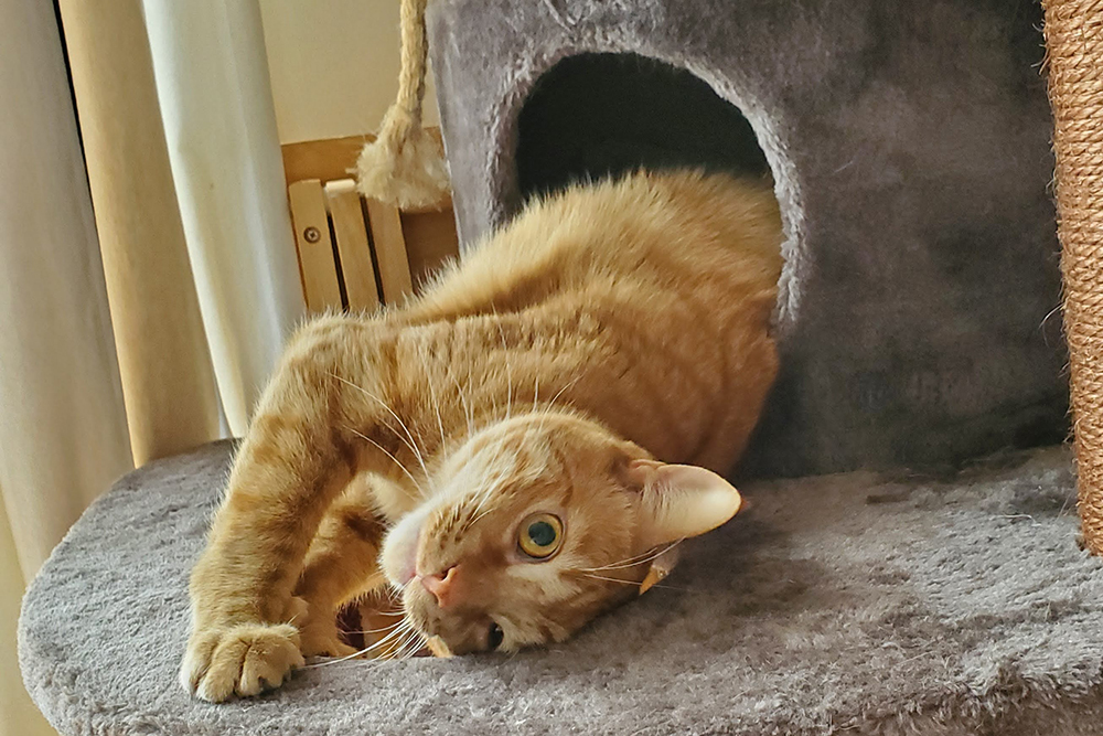 Happy Tail: Puff